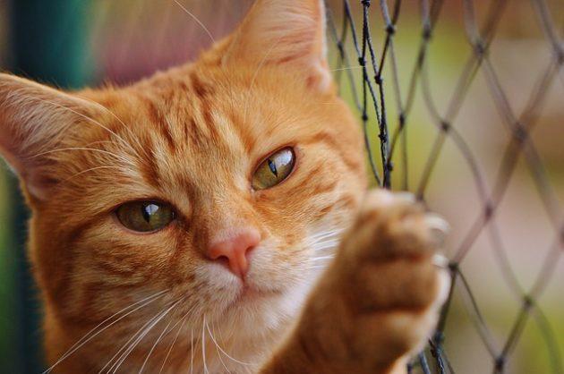 猫が金網をさわっている写真