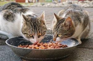 二匹の猫がエサを食べている写真
