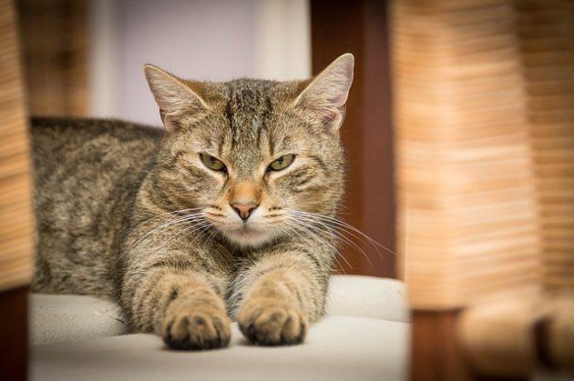 むすっとした顔の猫の写真