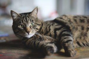 ねそべる猫
