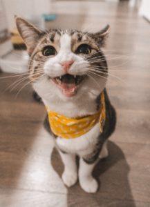 何か叫んでいる猫