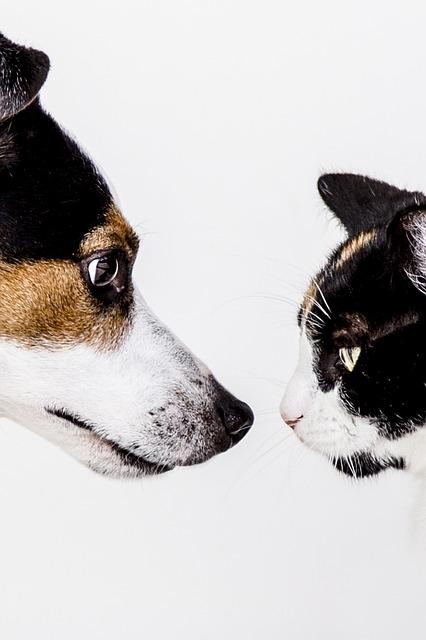 犬と猫が向き合ってる写真。投資相談に乗ってもらっている図