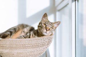 かごに入って物思いにふける猫