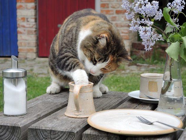カップの中のなにかを取ろうとしている猫