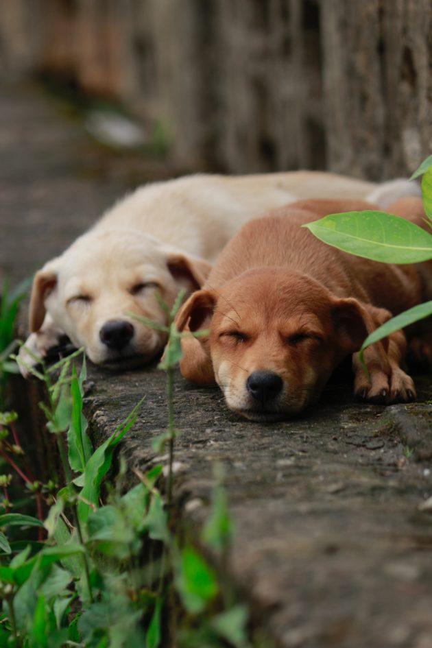 ねそべる犬2匹