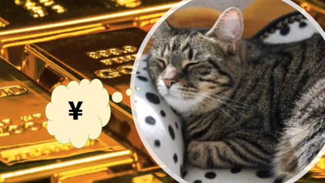 億万長者を夢見る猫