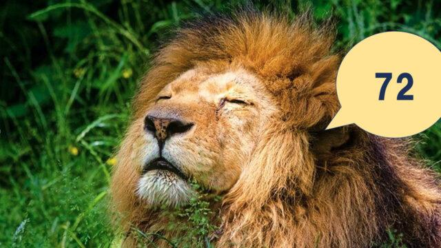 72ライオン